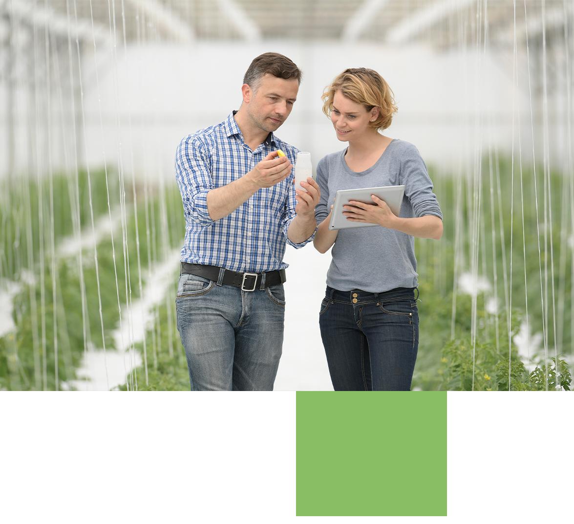 People using CropTrak in Greenhouse