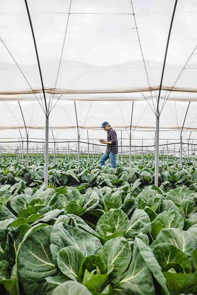 Man in Greenhouse on Ipad using CropTrak